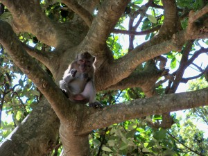 Bali - Monkey sitting in Tree